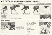 W3907 Allevamento Cani DUCA DI MANTOVA-ARRIBA - Pubblicità 1972 - Advertising