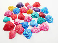 "100 small Dyed Ark Shells Seashell (1/2-3/4"") Beach Hobby Crafts Decor Colorful."