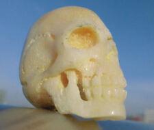 Schädel , skull aus Bein geschnitzt memento mori Wunderkammer !