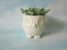 Ceramic Owl Planter in White Glazes  Mini Owl Desk Planter Vintage Design