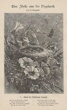 Vogelwelt Idylle Vögel Vogelnest Nest Jungvögel HOLZSTICH von 1879