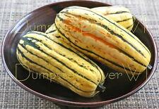 Organic Delicata SQUASH 25+seeds Sweet Buttery NON-GMO long Storage High Yields