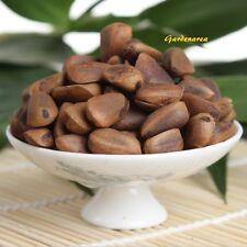 50 Graines Pinus Koraiensis ,  Korean Pine tree Fresh seeds