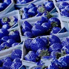 100PCS Organic Nutritious Delicious Blue Strawberry Antioxidant Vegetables Seed