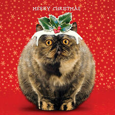 Pudding Cat Charity Christmas Cards Pack of 5 Funny Pet Cat Quality Xmas Cards