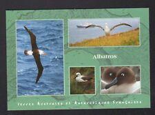 TERRES AUSTRALES & ANTARCTIQUES / T.A.A.F. / ILE KERGUELEN , LES ALBATROS