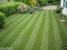 Turf Lawn Grass Seed- Dark Green Soft Grass for Healthy Lawn -Pack of 2000 Seeds