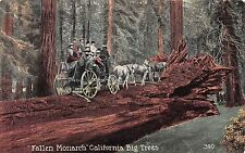 California postcard Fallen Monarch California Big Trees tree horse & carriage