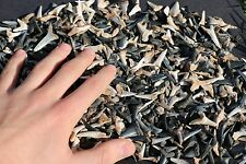 Lot of 25 Shark Teeth Tooth Megalodon Tiger Great White Mako Necklace jaw jaws