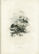 1802 Tookey Print Dog chasing Skunk Published by Darton Harvey & Belch London