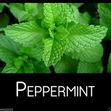 MINT- Peppermint,Mentha Piperita(300 Seeds) Grow indoors or outdoor-Organic !
