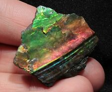 Beautiful 44.6 ct Section of Ammolite Ammonite from Alberta, Canada