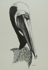 "10"" x 14""  Pen and Ink Pelican Print Scott Hecker Unframed"