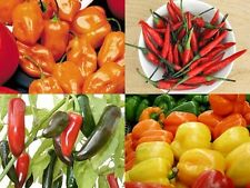 0ver 10 varieties of Fresh mixed chilli seeds 2016 U.K Seller.