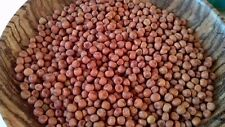 RED CARLIN PEA ANCIENT ENGLISH 14 C VARIETY RARE HEAVY CROPPER 40 FRESH SEEDS