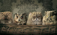 Cats & Owl in Basket Canvas Print A4 Size  (297 x 210mm) !