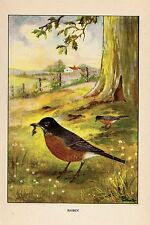 """1926 Vintage TODHUNTER BIRDS """"ROBIN"""" GORGEOUS 90 YEARS OLD Color Art Lithograph"""