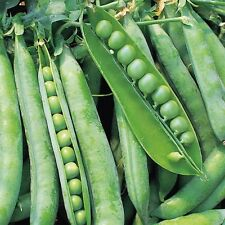 Pea - Greenshaft - 350 Seeds