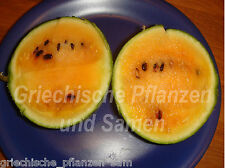Mini-Wassermelone ORANGELO Melone Melonen orange leckere Fucht 6 frische Samen