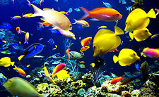 Framed Print - Schools of Colourful Tropical Fish Swimming in the Reef (Picture)