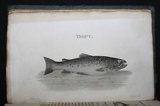 1815 Pêche Truite Angler's Guide Salter Poissons Fly-fishing Pike Perch Chub