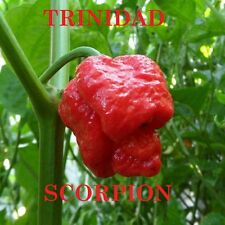 Chili Pepper Trinidad Scorpion Moruga 30 Seeds - One of the Hottest in the World