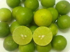 10Pcs THAI Lemon seed,CITRUS FRUIT ORGANIC FRESH RARE,TROPICAL LIME