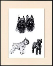BOUVIER DES FLANDRES LOVELY DOG SKETCH PRINT MOUNTED READY TO FRAME