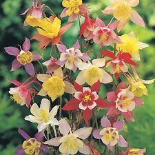 Columbine - McKanna's Giant  Mixed Colors - Heirloom - 25 Seeds