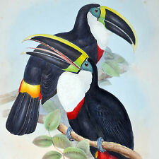 GOULD / RICHTER - COLOMATED TOUCAN (LEAR)- HAND-COLORED