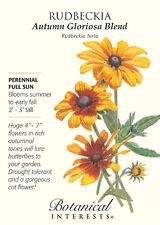 Autumn Gloriosa Rudbeckia Seeds - 1 gram
