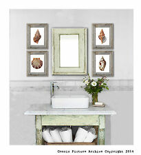 Sea Shells Beach Theme Decor Art Prints Set of 4 Wall Art 8x10 Poster Prints