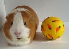 Wheeky Treat Guinea Pig Ball/Treat Toy/Rabbit, Hedgehog, Hamster, Small Animals