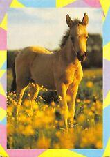 B98571 sweden horse chaveau  animals animaux