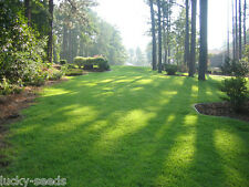 Zenith Zoysia Grass Seed 100% Pure 5 Lbs. 5000 Sq.ft Coverage - FREE SHIPPING
