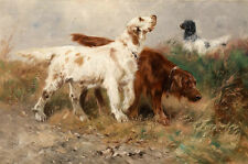 Charming oil painting Red and white dogs Shaggy Dog in Wilderness Hand painted