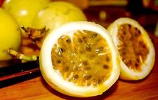 Passion fruit Seed Sweet Beauty Flower 100% Organic Passiflora Edulis Sweet