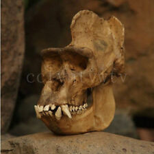 New The Quality simulation model brown resin gorilla skull specimen k-90