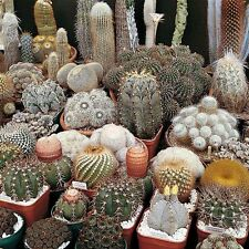 Cactus mix 50 seeds ( Approximate ) *Easy grow * Care free * CombSH C21