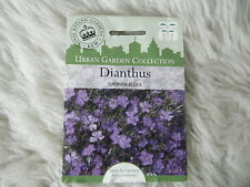 SEEDS T&M FLOWER   DIANTHUS SIBERIAN BLUES SEED RRP £2.99