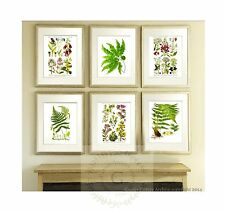 Wild Flowers Antique Fern Prints set of 6 Botanical Wall Hanging Art Decor