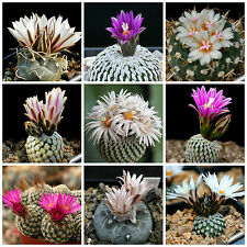20 seeds of Turbinicarpus mix cacti mix, succulents seeds mix R