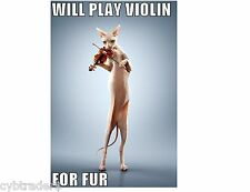 Sphynx Cat Playing Violin Funny  Refrigerator / Tool  Box  Magnet