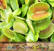 (10) VENUS FLY TRAP Seeds - Carnivorous Dionaea Muscipula Flower Seed  Comb. S&H