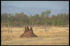 296063 Fothergill Island Termite Mound A4 Photo Print