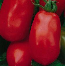 Tomato - Roma - 75 Seeds