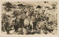White Sands NM * Prickly Pear Cactus RPPC 1920s * Alamogordo- Las Cruces