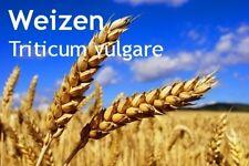***Weizenkeimöl, kaltgepresst (Triticum vulgare) 250ml, Deutschland