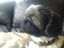 Dog Muzzle especially made for grooming flat faced dogs ie: shih-tzu ,