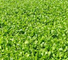 10 Pounds Buckbuster Forage Rape Seed Food Plot for Deer and Other Wildlife